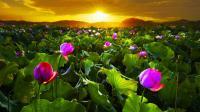 245781__glorious-sunrise_p